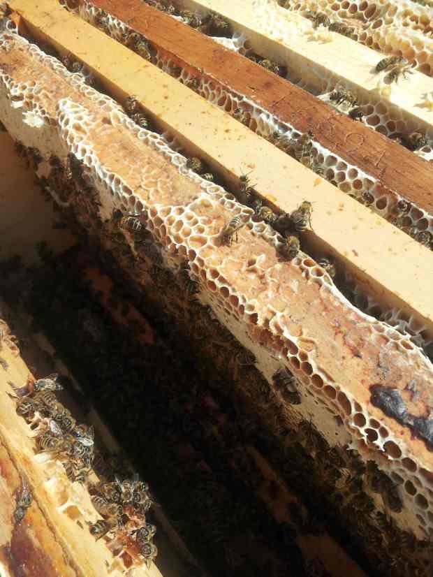 Hive Topbox
