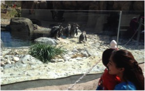penguin_zoo
